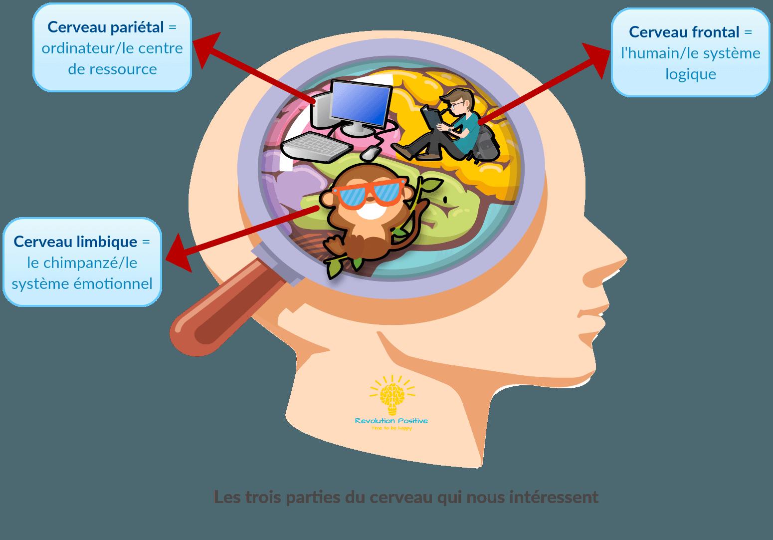 Trois parties du cerveau qui sont important : le cerveau limbique qui est le système émotionnel, le cerveau pariétal qui le centre de ressource et le cerveau frontal qui s'occupe de la logique et du rationnel. Mieux comprendre et mieux gérer ses émotions