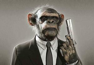 Pris en otage par un chimpanzé. Comment s'en sortir ?