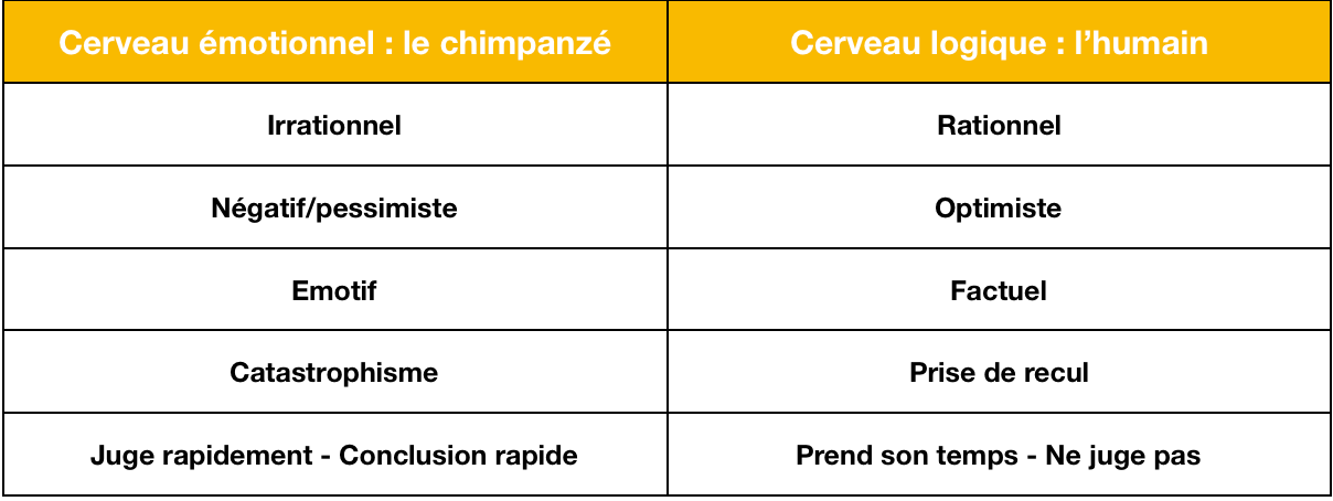 Comparatif entre votre cerveau émotionnel et votre cerveau logique. Quelles sont les caractéristiques de chacune de ces parties ?