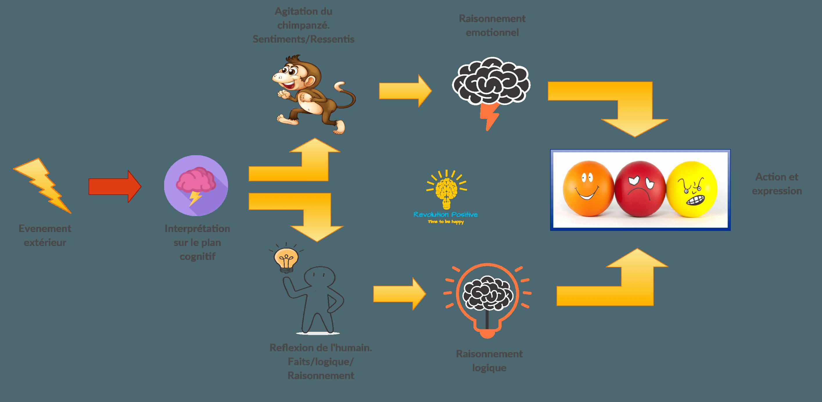 Gestion des émotions. Que se passe t-il lorsqu'un évènement extérieur survient ? Pourquoi nous réagissons trop rapidement ? Découverte du cerveau émotionnel et du cerveau logique.