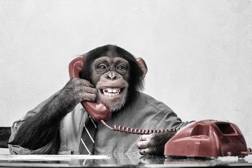 Le cerveau émotionnelle dirigé par un chimpanzé.