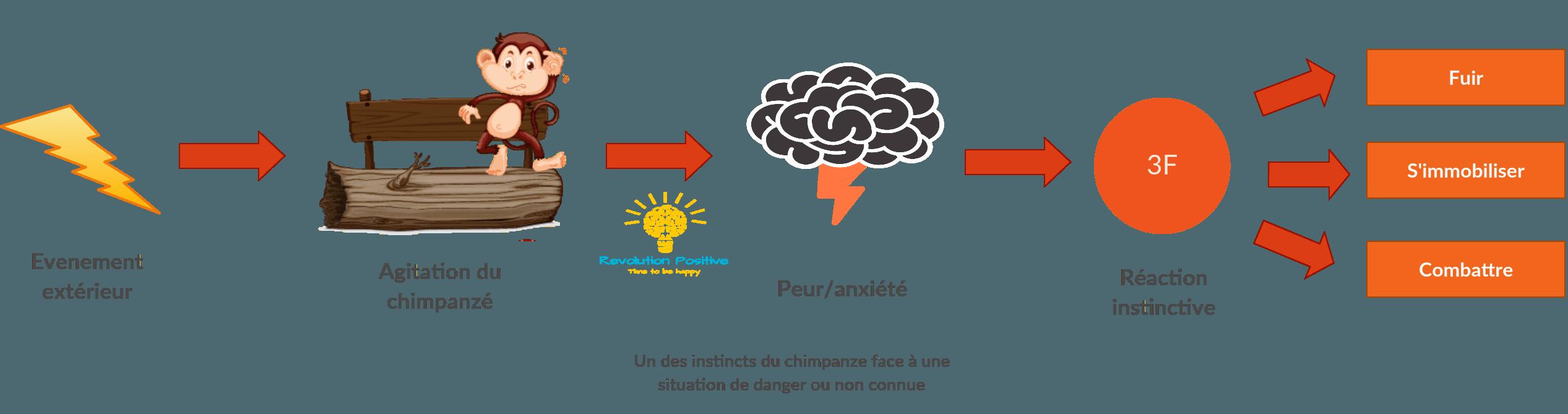 Reaction face au stresse. Combat, fuite ou immobilisation. Que faire face au stresse et face à de fortes émotions ?